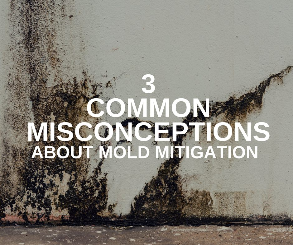 3 Common Misconceptions About Mold Mitigation