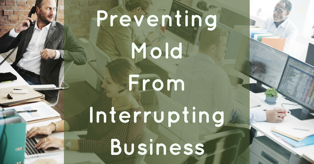 Commercial Mold Prevention
