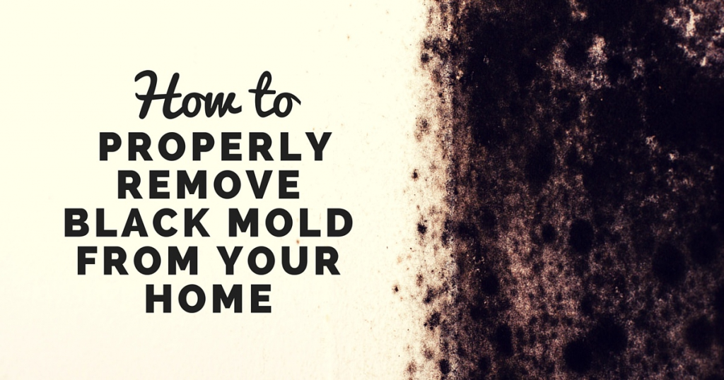 How to Properly Remove Black Mold
