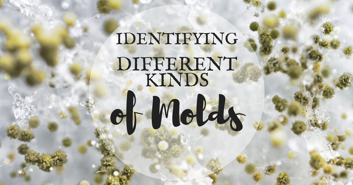 Identifying Different Molds