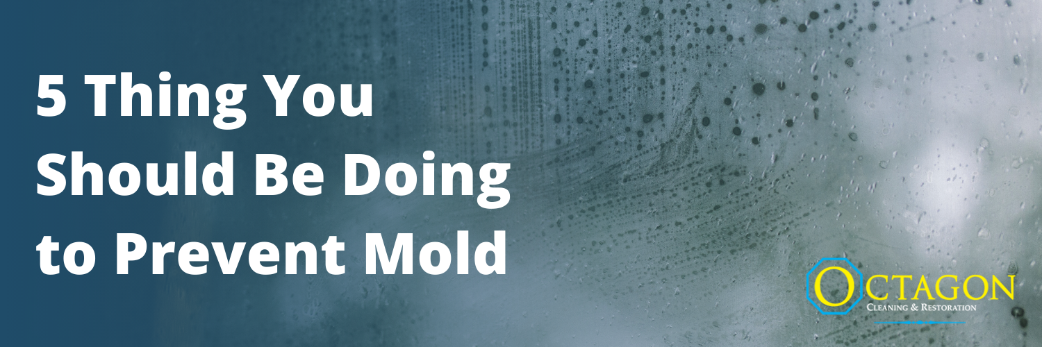 5 Things You Should Be Doing to Prevent Mold